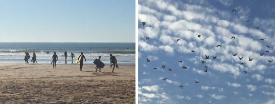 freedom of birds beyondline